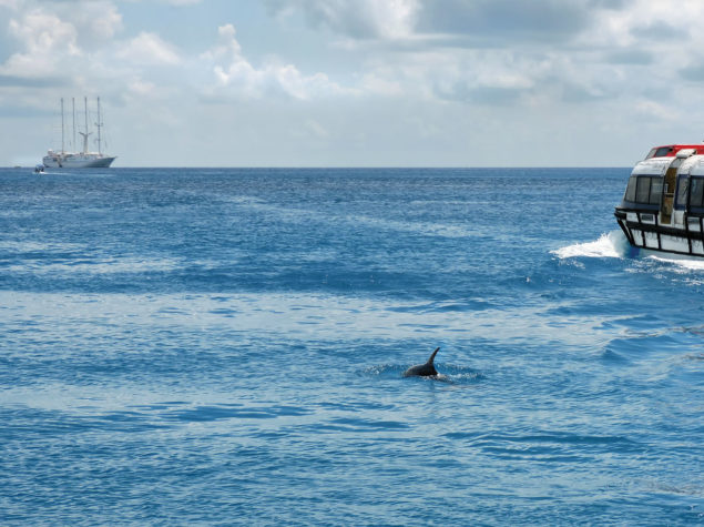 DSCN1011-12-x8-Dolphin-Tiputa